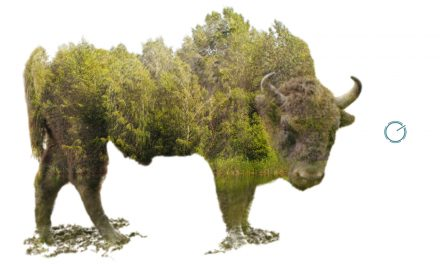 Double Exposure BY